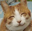 grinningcat142