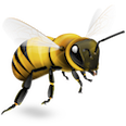 buzzasus
