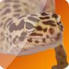 GRMrGecko